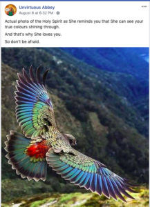 Photo of a colorful bird flying.